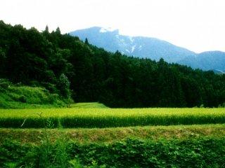วิวภูเขาอันงดงามและนาข้าวสีเขียวสดรอคุณอยู่ที่หมู่บ้านซึตมะโกะ