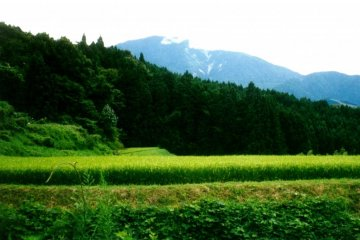 쯔마고에서는 아름다운 산경치와 푸르른 잔디밭이 당신을 기다리고 있다