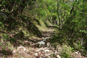 登山道は傾斜がゆるやか。小さな子供でも十分登れる