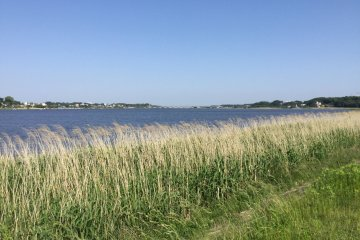 The wide expanse of the marsh on a sunny day