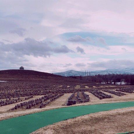 Hill of the Buddha แห่งฮอกไกโด