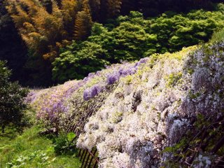 Lorsqu'on regarde l'extérieur du tunnel, on ne peut qu'imaginer le travail minutieux effectué pour obtenir un jardin si magnifique