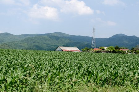 Bị lạc ở vùng nông thôn
