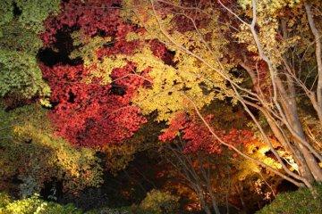 Koyou illuminated at night on the grounds of Okochi Sanso