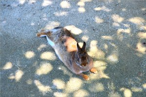 Bunny resting