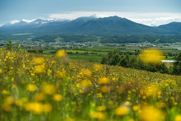 A hill view over Furano