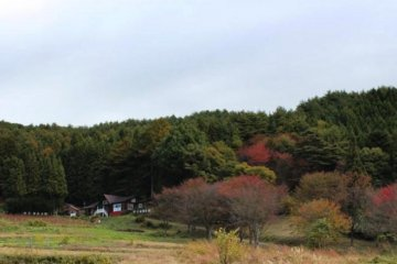 <p>Hard to see autumn foils yet.</p>