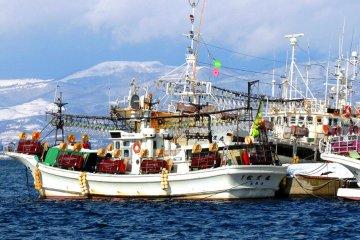 Рыболовные судна доставляющие только что выловленных кальмаров на рынок Хакодатэ