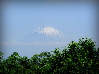 View of Mt. Fuji from the Otome pass trail