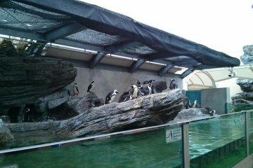 可愛的企鵝們