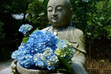 Kamakura Meigetsu-in Temple in June