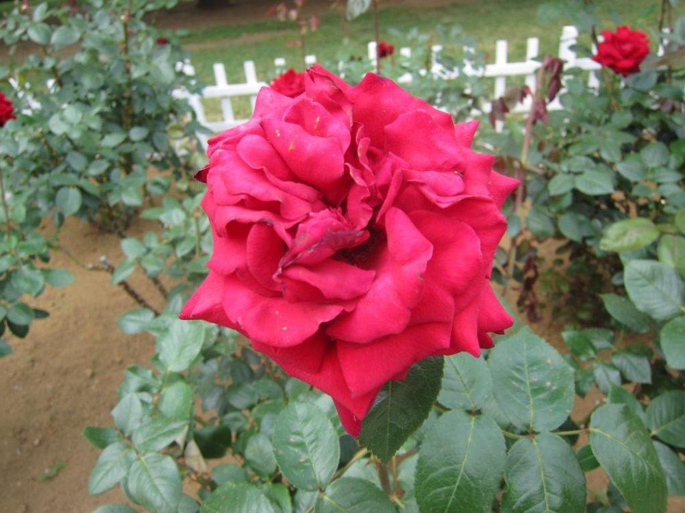 Любуйтесь прекрасными цветами по пути