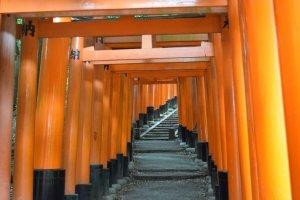 A impressionante sucessão de portões (tori) na colina do Fushimi Inari Taisha