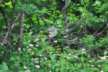 One of the many butterflies we saw while walking down the path to the beach.