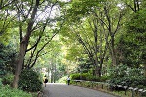 신쥬쿠 쥬오 공원