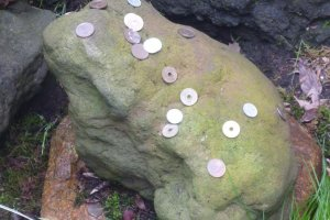 Cafe Shimizu's frog rock