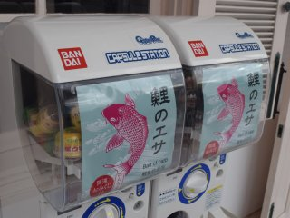 You'll find fish food in small vending machines here...