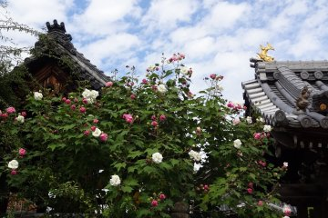 Ofusa Kannon Temple