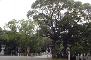Over 100 year old trees all around the shrine