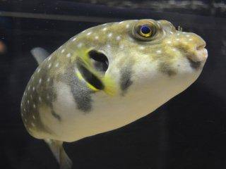 Chú cá này chào mừng bạn đấy