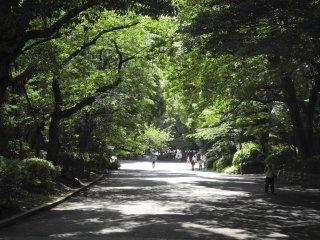 Vers le centre du parc