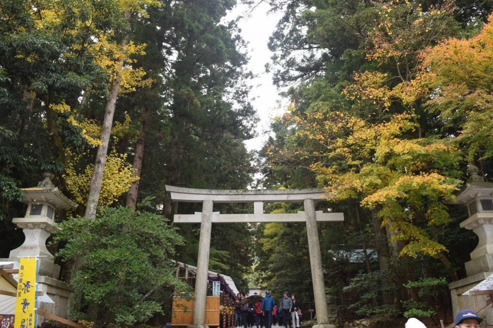 There are plenty of trees with changing leaves as you walk up to the shrine