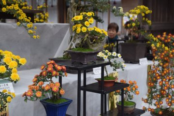 Award winning flowers