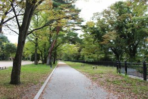 Просторные дорожки парка