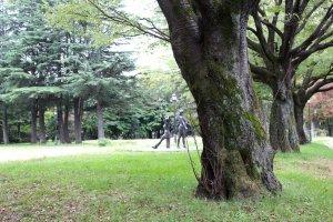 Огромные деревья и лужайки