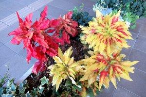 Осенние цвета