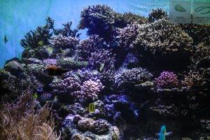 Tropical exhibits