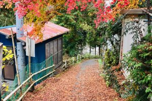 Autumn colors on a path above the Tama River