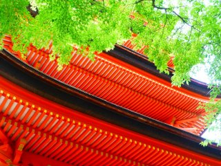 Look up and you'll see the tiny maple leaves which stand out against the color of the pagoda