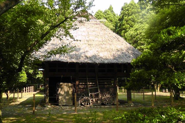The Miyazaki Shrine Forest - Part 4