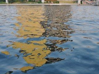 Le rivière était un peu sale et remplie de méduse