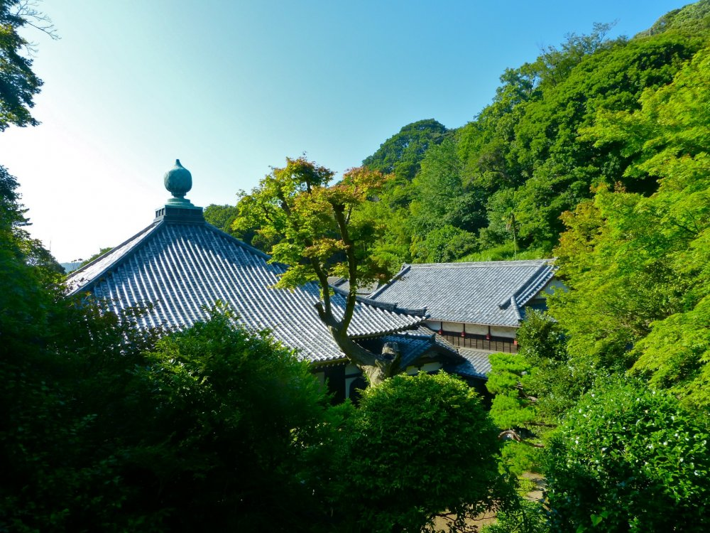 Jinmu-ji Temple is deep in the forest