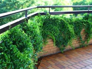 No piso superior do observatório, até a varanda está coberta de vegetação luxuosa