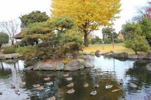 Công viên Suijyou vào mùa thu