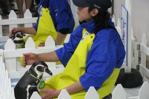 Нам удалось погладить пингвина!