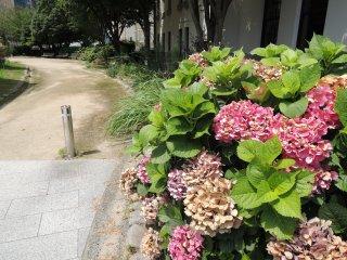Beautiful flowers in the garden