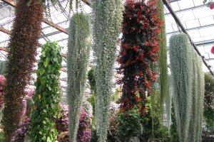Висящие растения