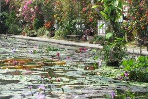 Бассейн с водяными лилиями