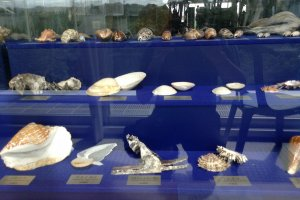 A collection of shells on display. Nearby are models of sea creatures, live, and dead fish specimens.