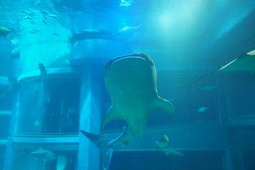พิพิธภัณฑ์สัตว์น้ำไคยุคังแห่งโอซาก้า