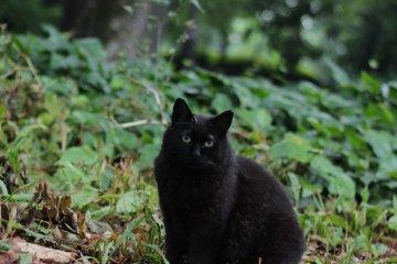 수풀에 숨어 있는 많은 고양이가 나온다