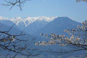 Горы и сакура