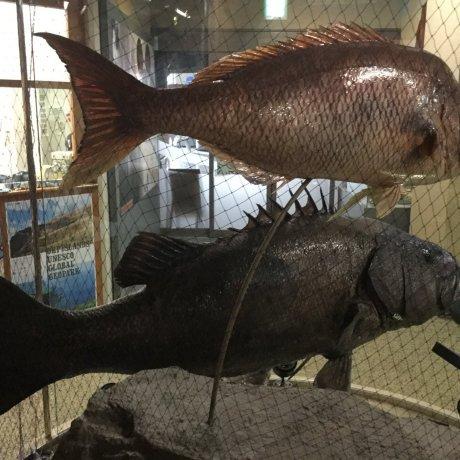 Oki Nature Museum