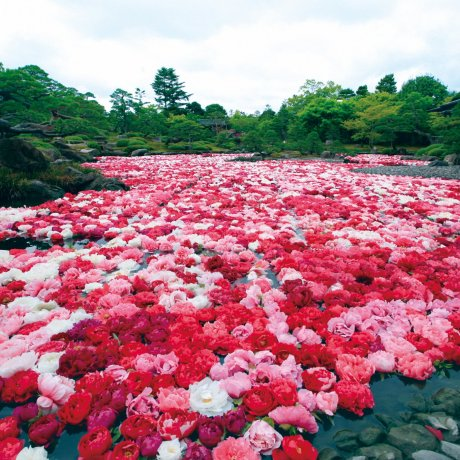 Deux Jardins Traditionnels Hors Norme : Au Musée d'Art Adachi et à Yuushien