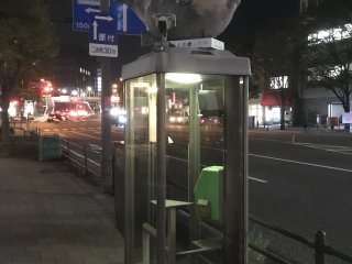 Phone box fugu!
