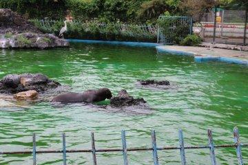 海豹清凉一夏